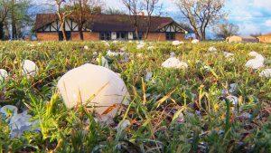 home insurance hail storm